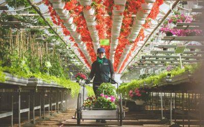 Valinnalla varmuutta kesäkukkien kukoistukseen